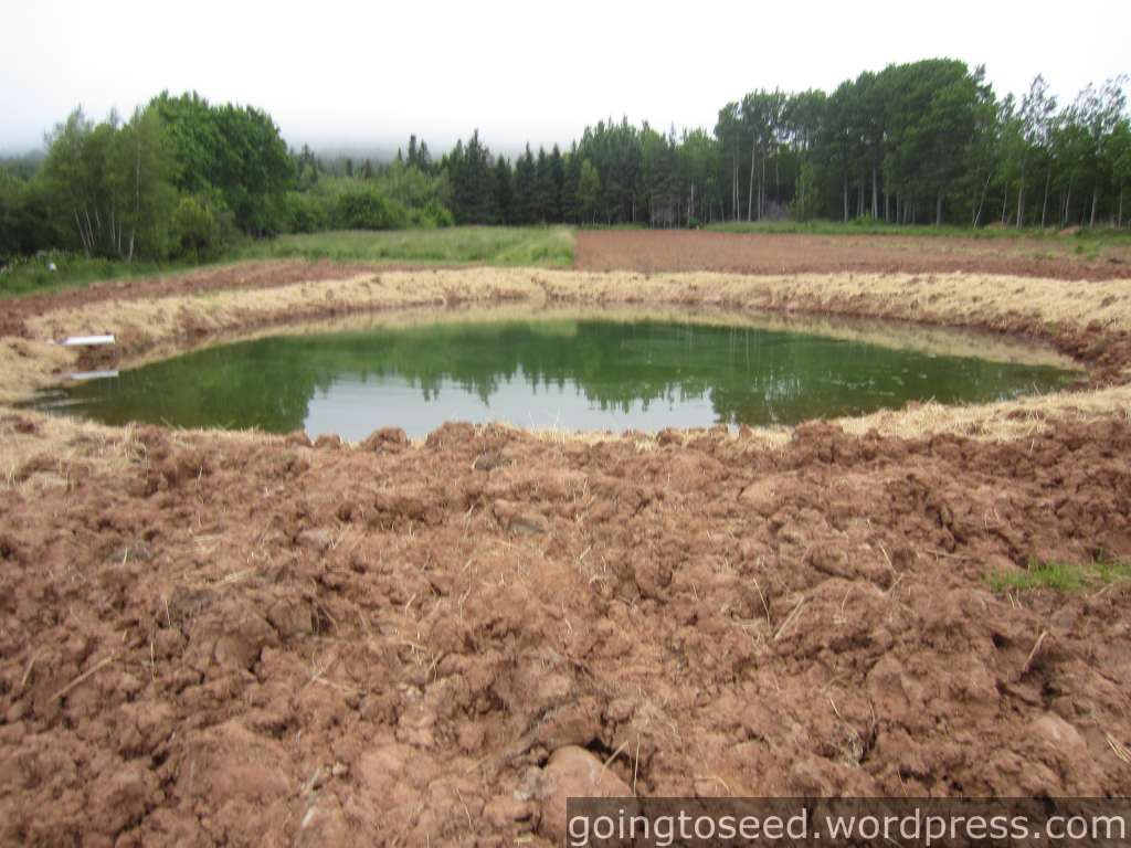 Small farm pond construction pictures to pin on pinterest for Building a small lake